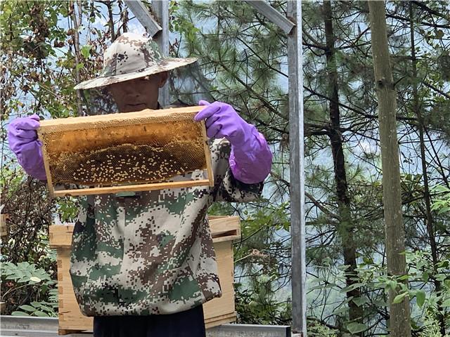 重庆彭水:蜜蜂养殖拓宽村民增收路
